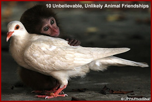 10 Slideshows You Must See Right Now, 10 Unbelievable Animal Friendships, 11 craziest things about the universe, 19 signs the economy is worse, 20 most ridiculous looks from spring 2011 men's collections, Agnes Szavay, Al Capone, Ana Ivanovic, Anna Kournikova, Ari Emanuel, Ashley Harkleroad, Barry Diller, Ben Silverman, Business Insider, carlo gambino, Carmine Persico, Charles Keates, Electus, Fabrice Pasquinelli, Flavia Pennetta, Foxes Of Finance, Gregory Scarpa, Gus Lubin, Henry Blodget, Jason Mudrick, Jeff Altman, Jeff Weiner, Jill Kennedy, John Gotti, Joseph 'Joey Bananas' Bonanno, Joseph 'Joey' Massino, Josh Birnbaum, Josh Fink, Khan Manka, Manka Bros., Maria Kirilenko, Maria Sharapova, Mary Pierce, MIchael Platt, Nicolas Genechesi, Notional, OnMedea, Ricky Van Veen, Salvatore 'Sammy the Bull' Gravano, Sasha Talebi, Scott Steinman, Serena Williams, Slideshows, Ted Geary, top grossing animated movies, Tree Hugger, Trey Beck, Venus Williams, Vincent 'The Chin' Gigante, Vito Genovese, What Booze Looks LIke Under A Microscope, World's Largest Media Company, world's most expensive cities