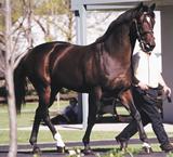 king_abdullah_racehorse.jpg